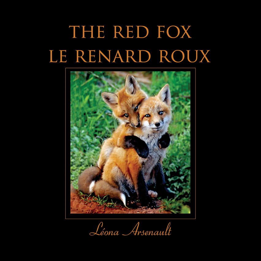 The Red Fox / Le Renard Roux