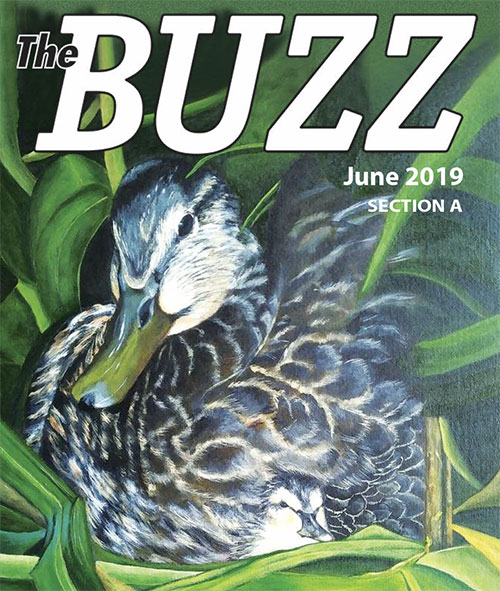 The Buzz - June 2019
